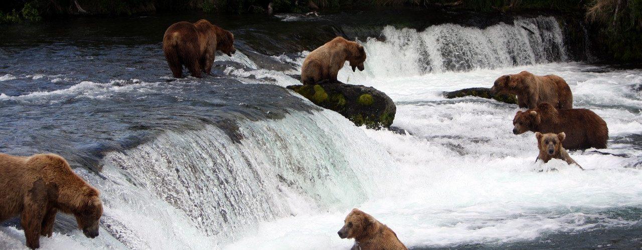 Alaska IMG